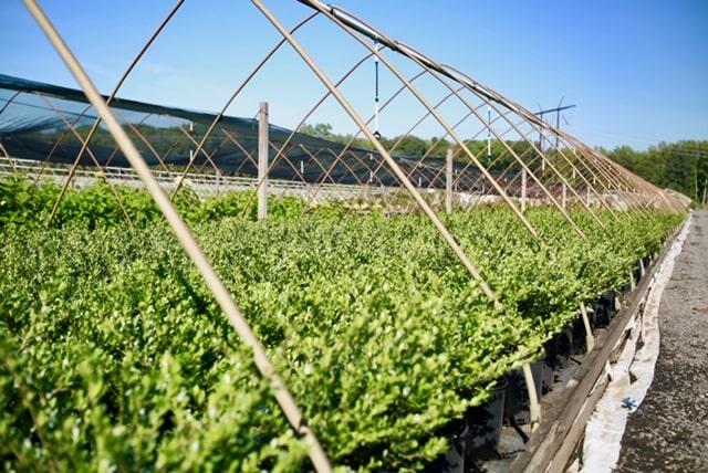 Tidbury Creek Farms